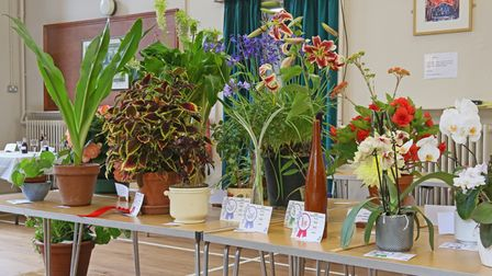 Prize certificates and rosettes awarded at Bardfield Horticultural Society's Summer Show, Essex