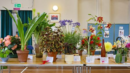 Flowers and plants on a table with certificates and rosettes at entries at Bardfield Horticultural Society Summer Show