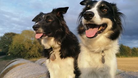 Cloud and Shadow, two border collies who live at Tittleshall, between Dereham and Fakenham.