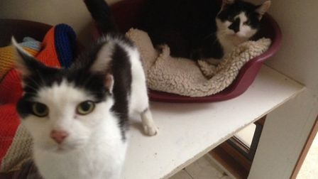 Gino and Kassey are two golden oldies. they are both around 10 years old and are super friendly cats