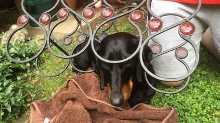 Millie the Dachshund had to be rescued by fire crews after she got stuck in a wine rack in Jubilee Close, Waterbeach.