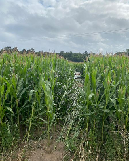 The stolen car has been reported to have flown 10ft into the corn field