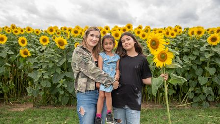 Lorna, Tasia and Esme with the sunflowers. Picture: Sarah Lucy Brown