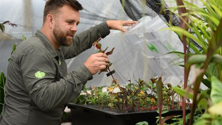Carl Cooper with the tropical plants in the propagator at his home in Rackheath where he runs his bu