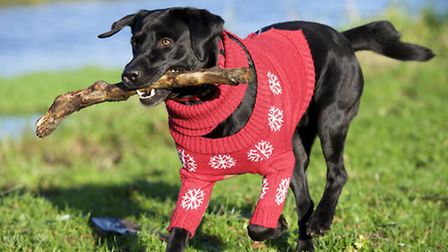 Dizzie the Dog is the latest star of the AGA bookshop christmas campaign.Picture: MARK BULLIMORE