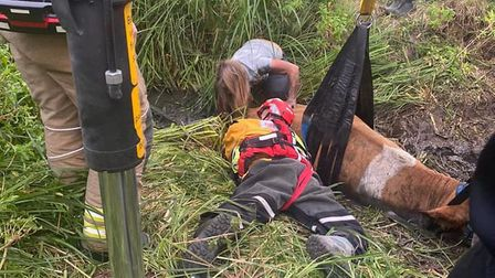 Suffolk Fre and Rescue helping the cow out of a ditch.