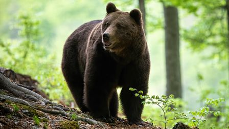 Twitter users have been sharing their stories of #NorfolkCensusBearDay