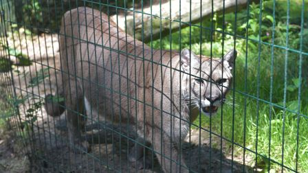 Amazona Zoo, Cromer reopens Pictures: BRITTANY WOODMAN