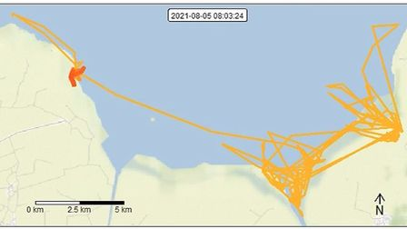 Radio and GPS tags fitted to a small sample of Curlews allow for scientists to keep up to date with the two birds.