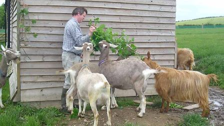 Goats-favour-branches-over-any-1a538361