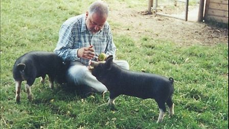 Two-Berkshire-pigs-and-friend-f79c8cd9