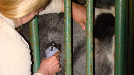 Routine testing for bovine Tuberculosis is something that all cattle keepers have to live with