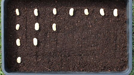 STEP 2: Ensure even spacing when sowing