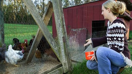 A balanced diet is essential for your chickens well-being