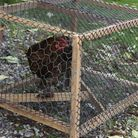 My Broody Buster - a simple home-made timber cage with plastic mesh flooring.
