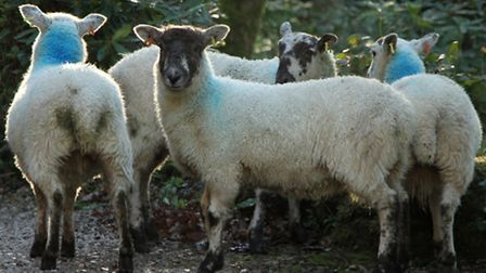 Ensure that all animals are correctly identified and tagged