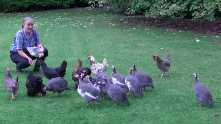 Guinea fowl make plenty of noise, which may deter a thief
