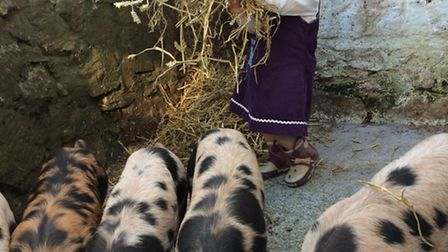 With the piglets
