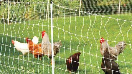 Now is the time to check your electric fence