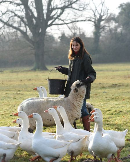 Sally Morgan at her Somerset farm with sheep and geese Photo: courtesy Daily Telegraph