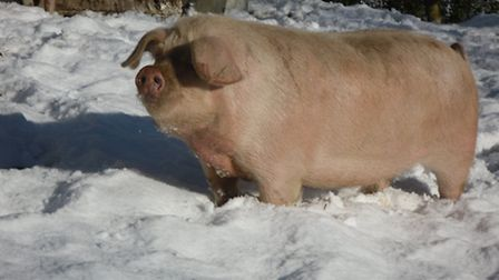 Ensure your animals are well cared for in winter