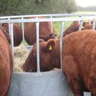 Do cows need to be fed with more than just grass?