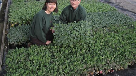 Husband and wife team John Overvoorde and Jill Vaughan with some of their plants