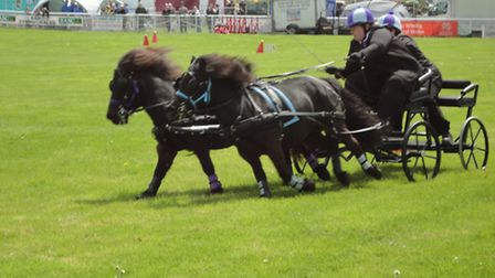 There were plenty of thrills in the scurry driving in the main arena