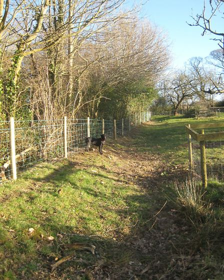 A new orchard fence