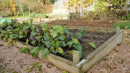 Raised beds - a new concept