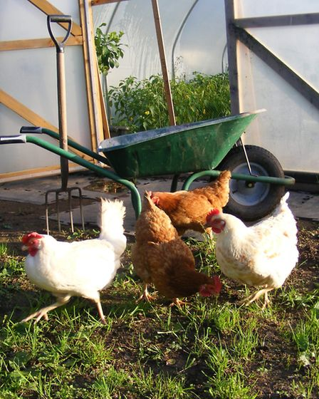 The 'good life'...not complete without a growing area and some hens