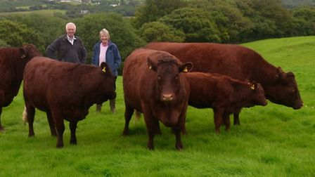Roger and Alison Parmley with their Red Devon cattle