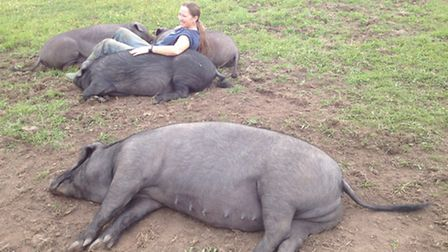Chilling out: Mandy with the Large Black