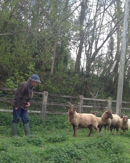 Mike Field with his sheep