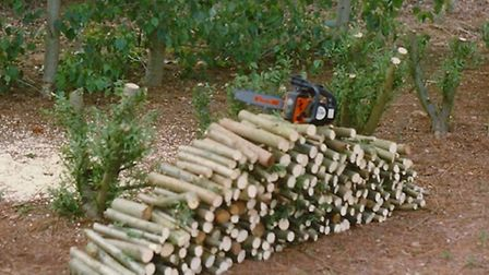 bowhayes logs