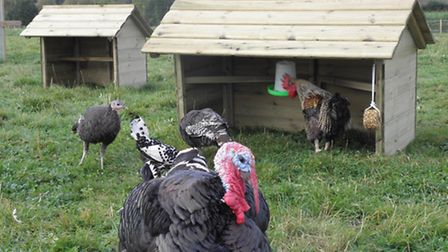 The poultry shelters