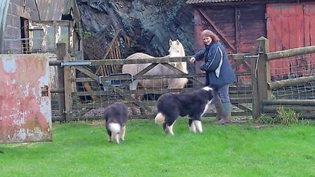 Liz Shankland enjoys life at her new smallholding in Wales