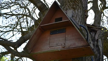 There are four barn owl nesting boxes on the smallholding