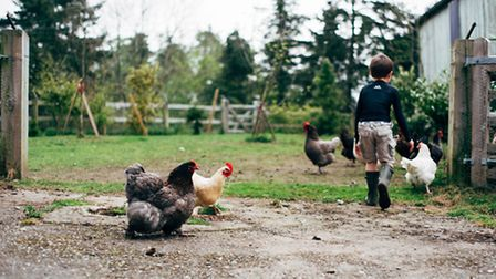 Sam's son Connor with the chickens