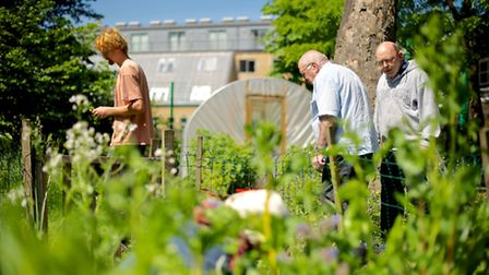 People with disabilities can find huge benefits from working in the garden. Photos courtesy MIND