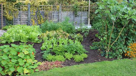 October harvests for winter include chicory, parsley, sorrel, carrots and perennial kale