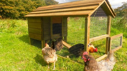 A small 'All in One' hen house