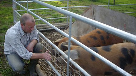 Jeff with their Oxford Sandy & Black pigs