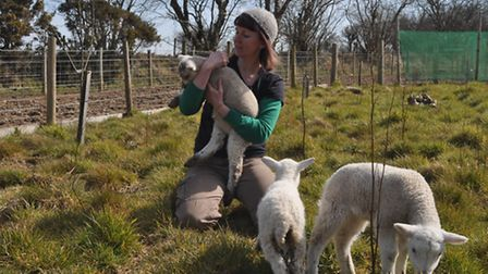 Kim Stoddart with young lambs