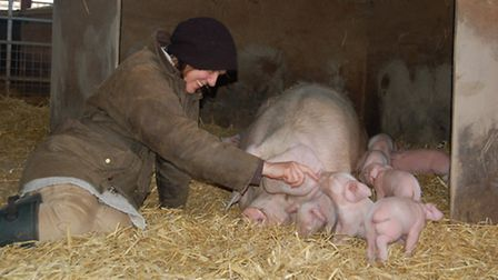 Sam with piglets and Gwen the pig