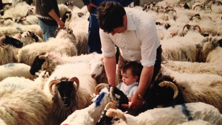 Introducing a youngster to sheep