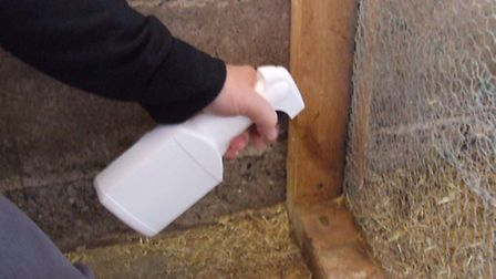 Spraying corners of the hen house with disinfectant