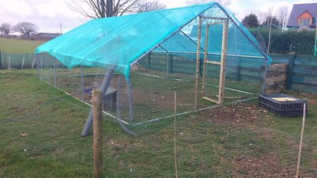 A covered run set up by Liz Zorab, a smallholder from Monmouthshire.