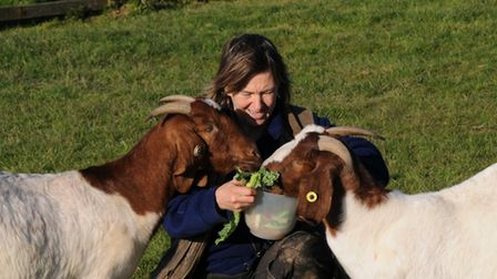 Looking after your breeding stock is an all-year round task - and should be enjoyable