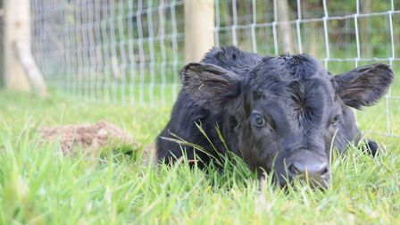 Were we 'lucky' with our calving this year or can we take some credit?